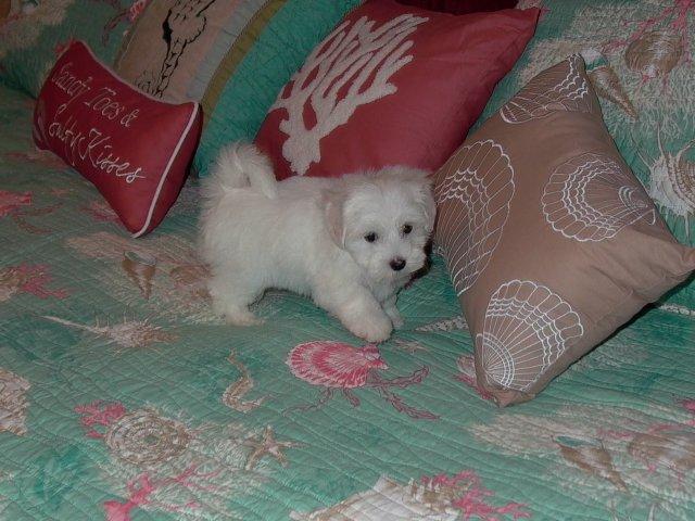 Puppy Adoption - Windy Way Pups